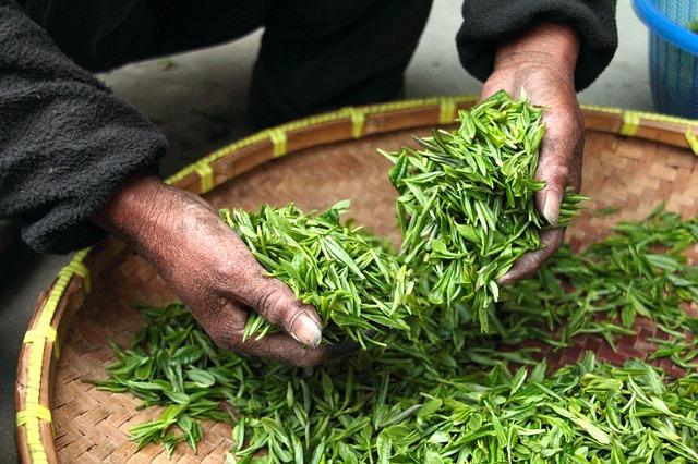 green tea cleanse